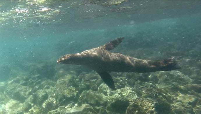 sea-lion-galapagos