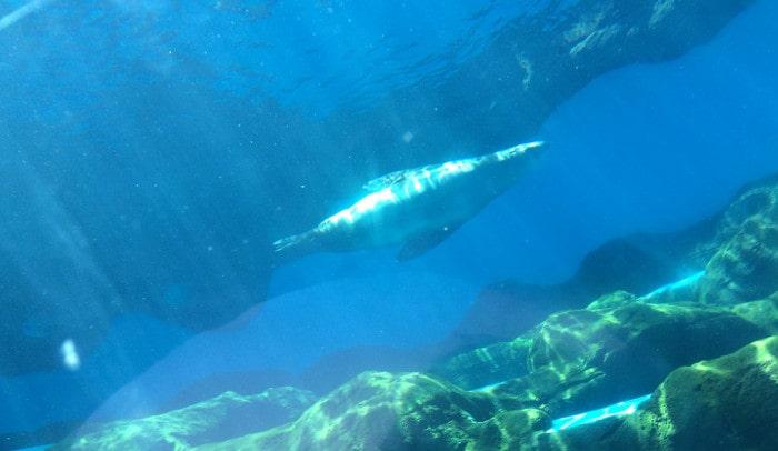 sea-lion-sydney-zoo